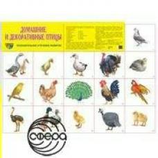 Плакат Домашние и декоративные птицы