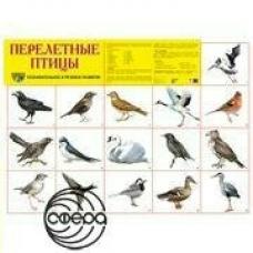 Плакат Перелетные птицы