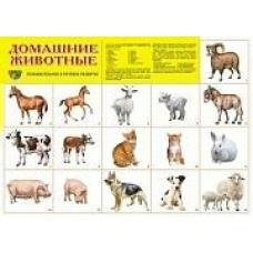 Плакат Домашние животные
