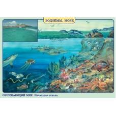 НАЧШ/Окруж.мир.Нежив. и живая природа.Лето/Водоемы.Море