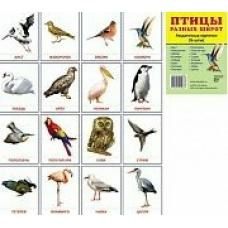Набор Птицы разных широт 16 разд.карточек