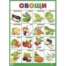 Плакат Овощи  550х770